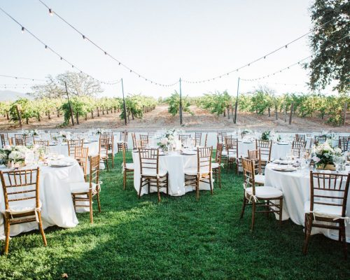 Getting Married at A Vineyard: How Much Does it Cost?