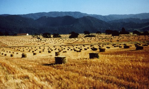 Gainey-field-bales Photo